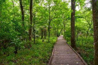 Goethe State Forest, Florida (2018)
